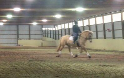indoor-dressage