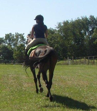 riding-back-buddy
