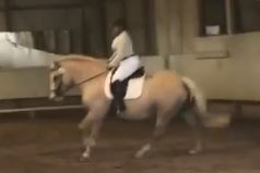 Left Canter.JPG